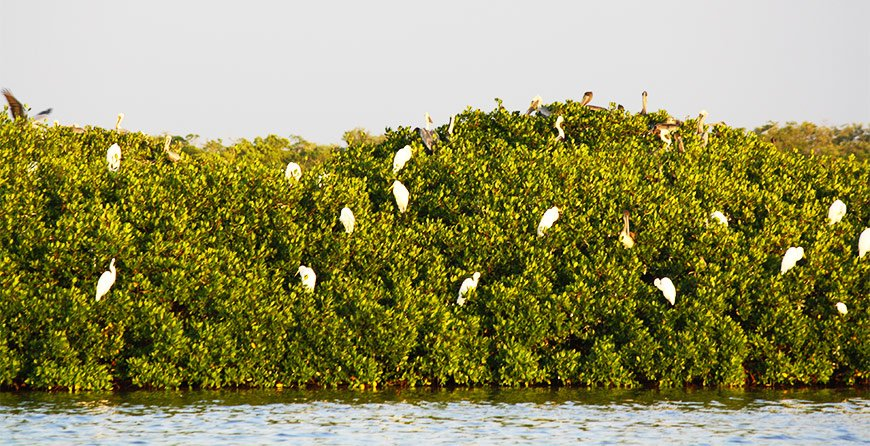 Image of birds seen from the breakfast cruise at Tarpon Bay Explorers