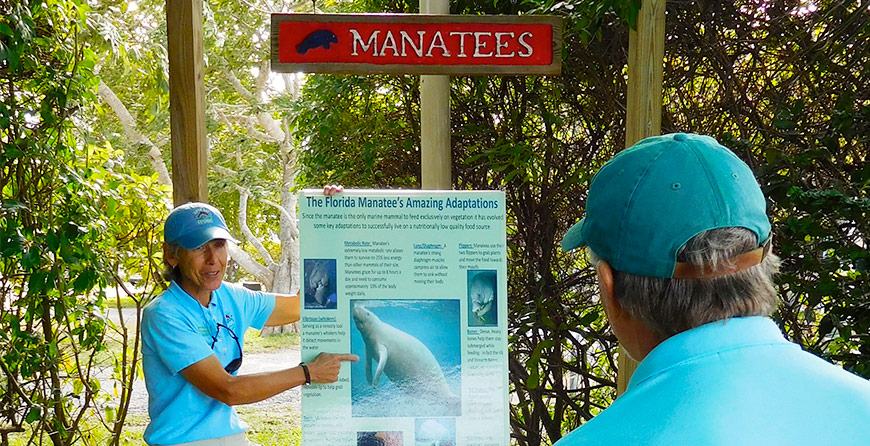 Image of a manatee deck talk at Tarpon Bay Explorers