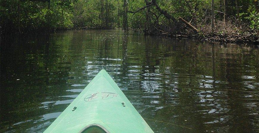 Image of the kayak trail tour at Tarpon Bay Explorers