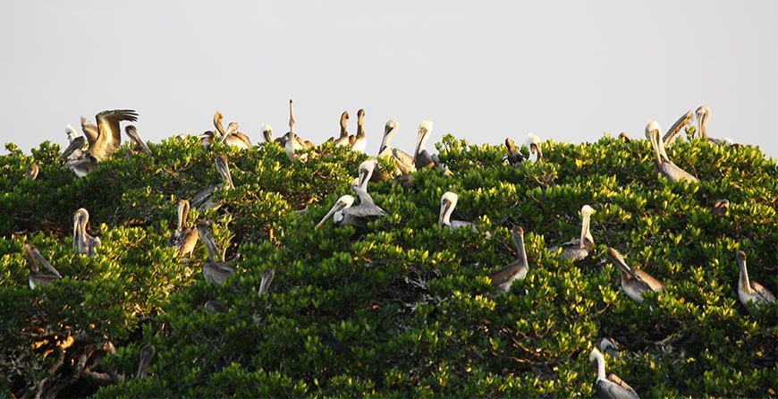 Image of birds seen from the nature and sealife cruise at Tarpon Bay Explorers
