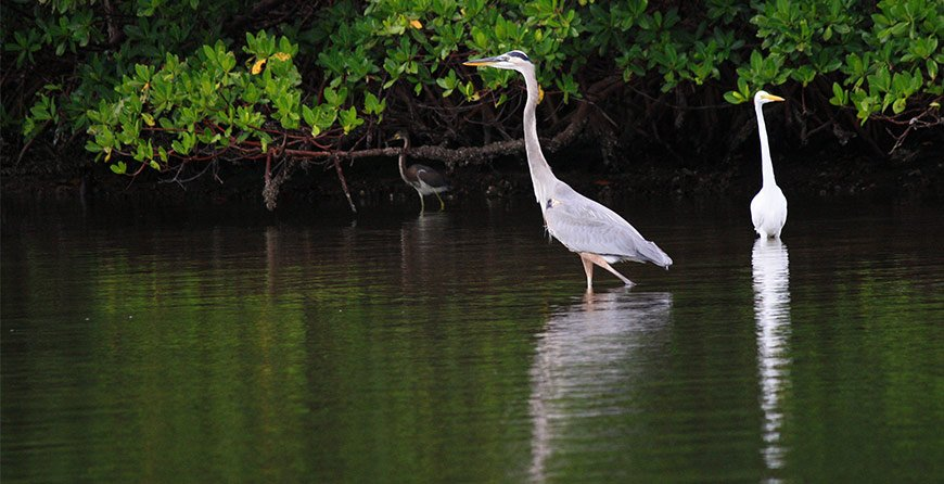 Image of wildlife on the standup paddleboard tour at Tarpon Bay Explorers