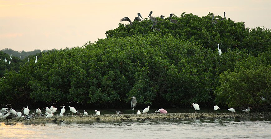 Image of the sunset rookery paddle tour at Tarpon Bay Explorers