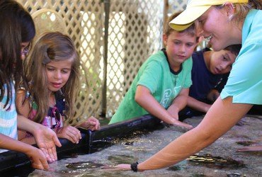 Image from the touch tank at Tarpon Bay Explorers