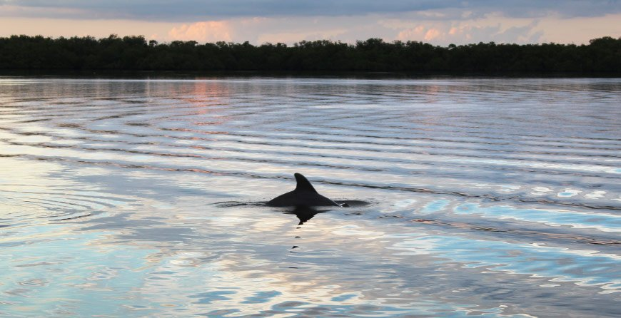 Image of a dolphin seen near in Tarpon Bay