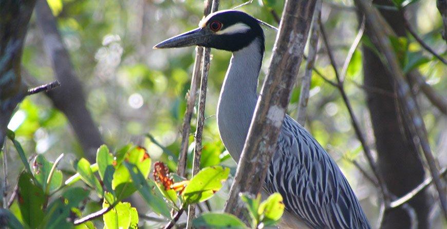 Image of a bird seen near in Tarpon Bay